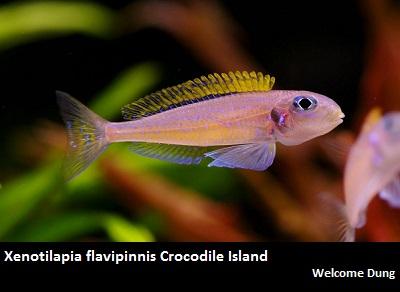 Dave's Rare Aquarium Fish-Price List